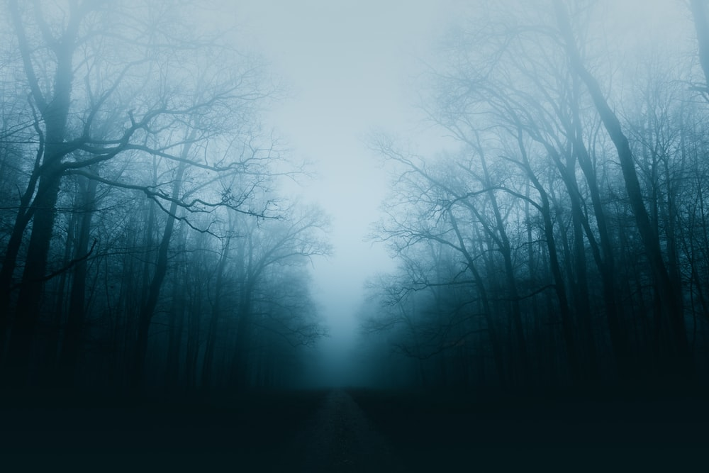 bare trees surrounded by fogs