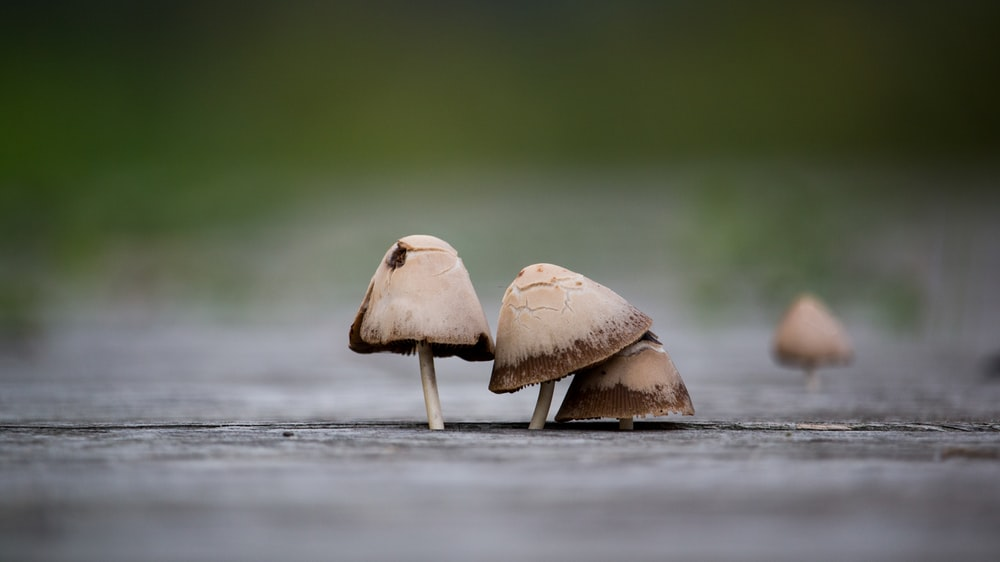 selective focus photography of mushrooms