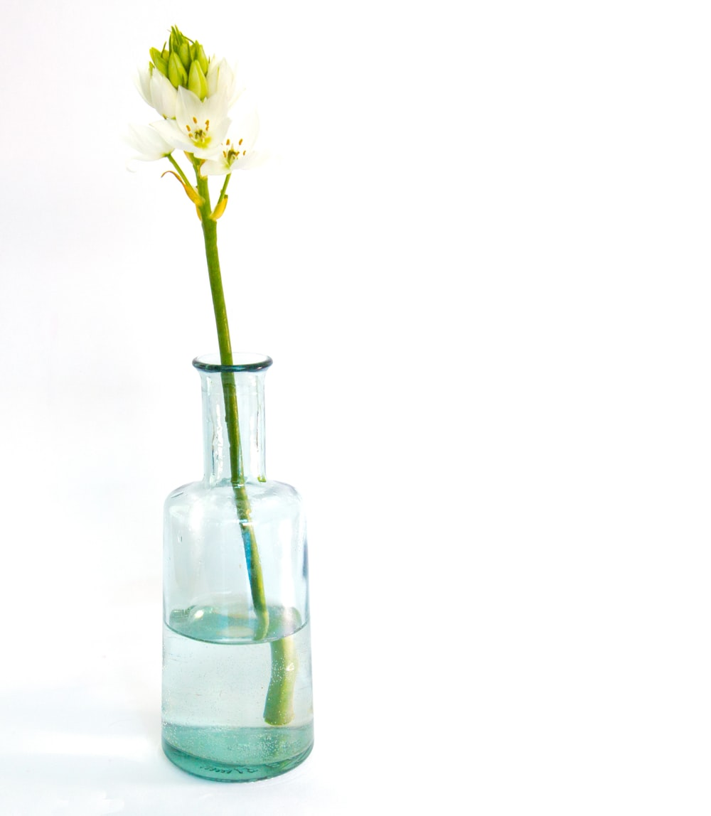 white and green petaled flower on clear glass botle