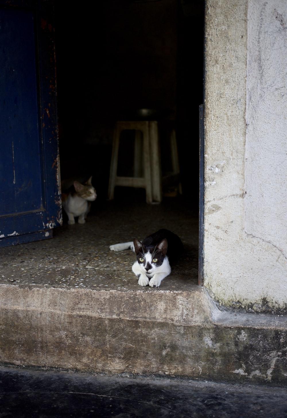 tuxedo cat beside wall