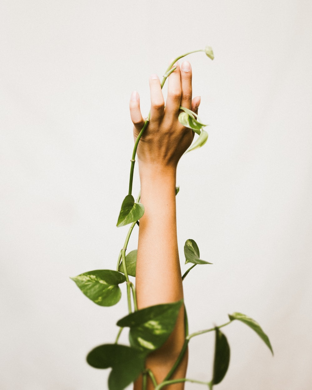 person holding ivy plant