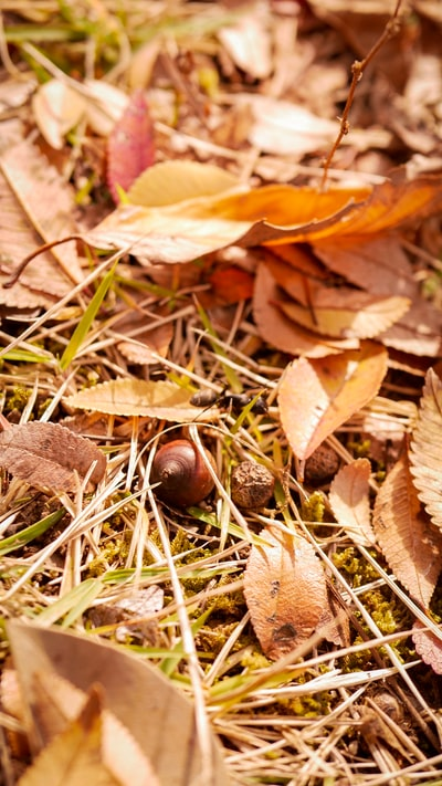withered leaves on grass