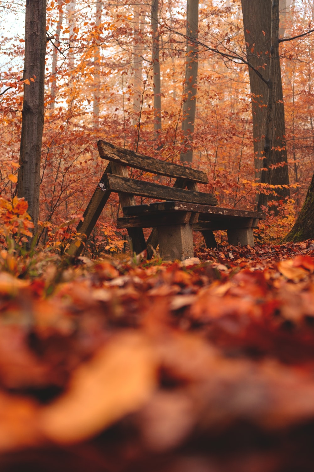 brown wooden bench near trees