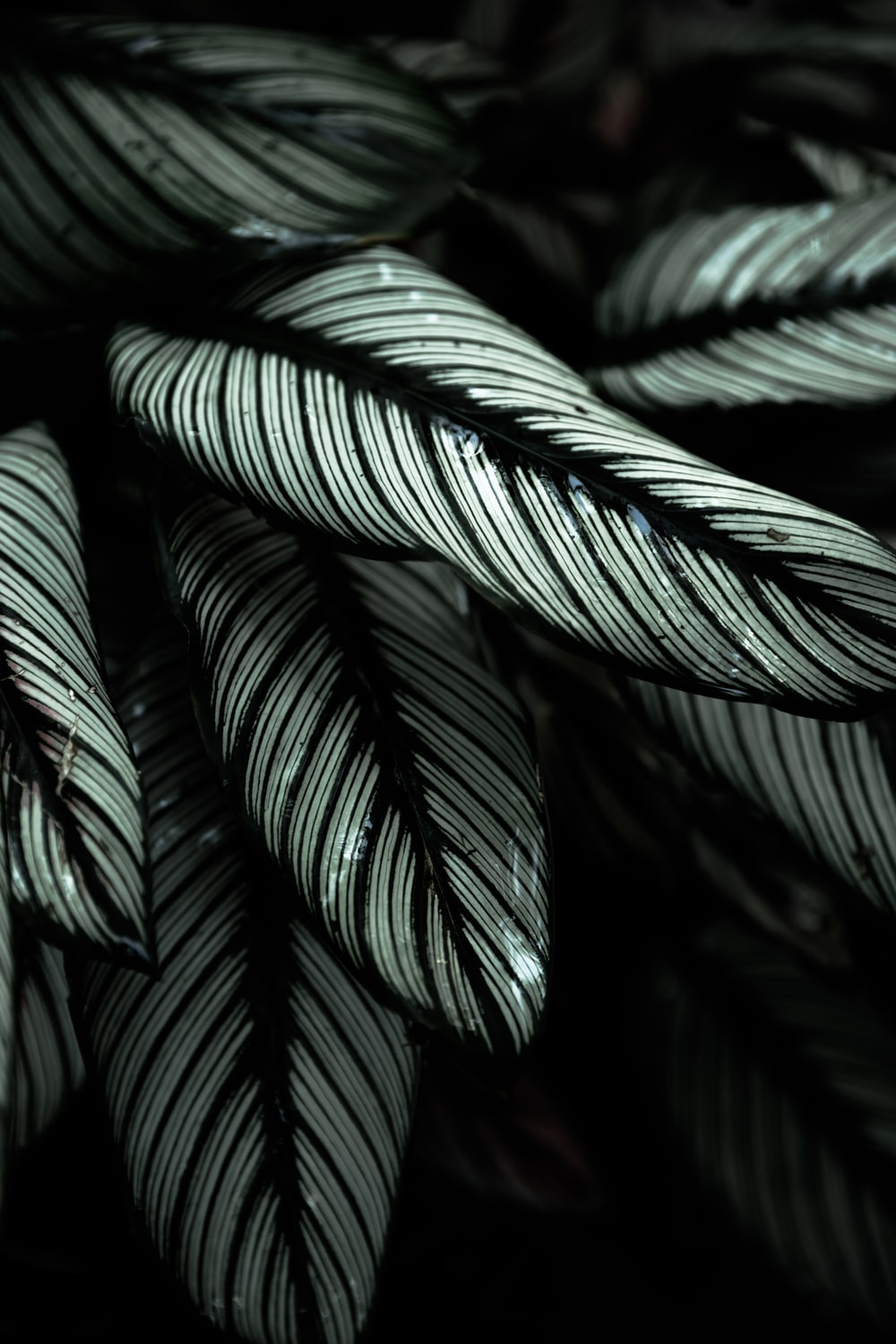 gray and black-leafed plants