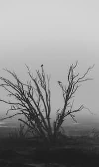 my Graveyard  poetry stories