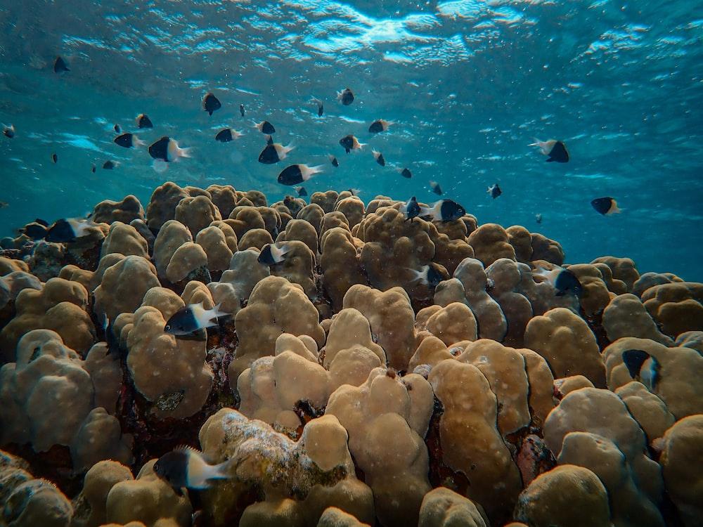 shao lof fish on reef