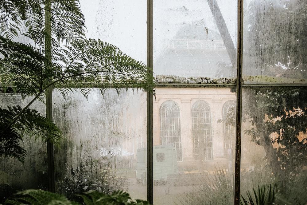 fern plants beside pane window