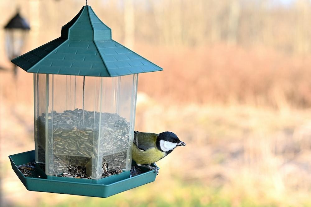 bird perching on a bird feeder filled with sunflower seeds