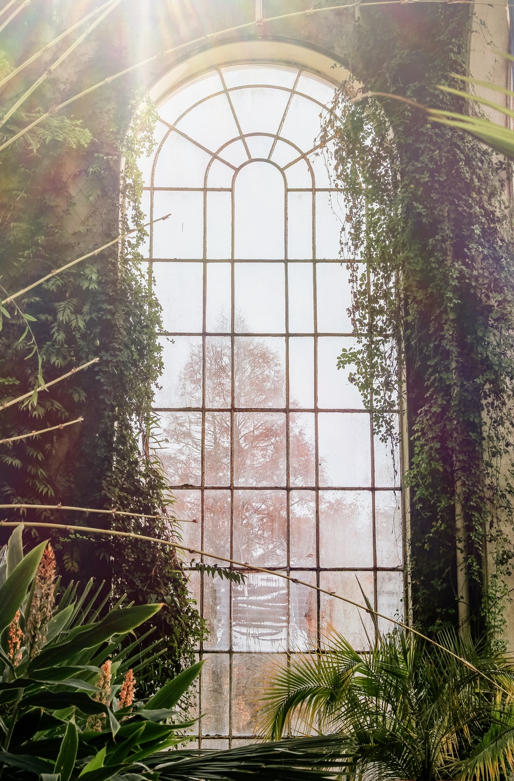 arch window surrounded with plants