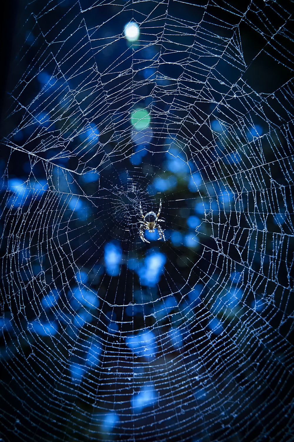shallow focus photo of gray spider