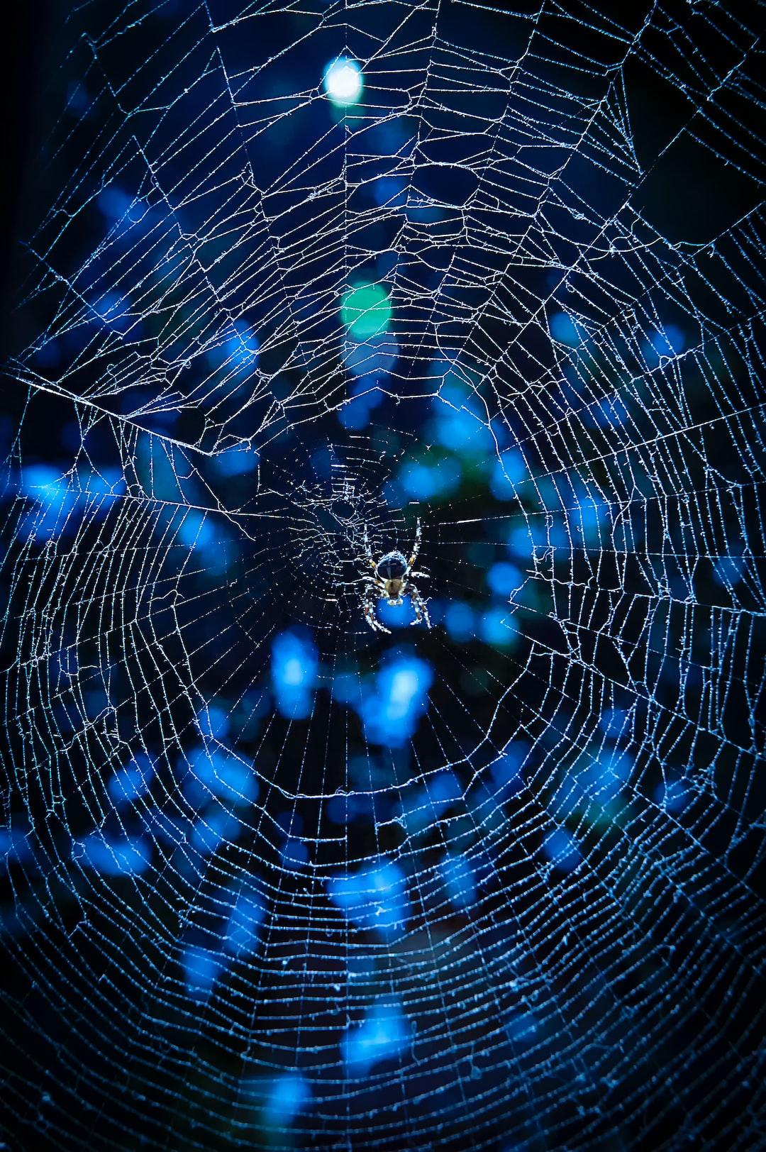 Midnight Spider