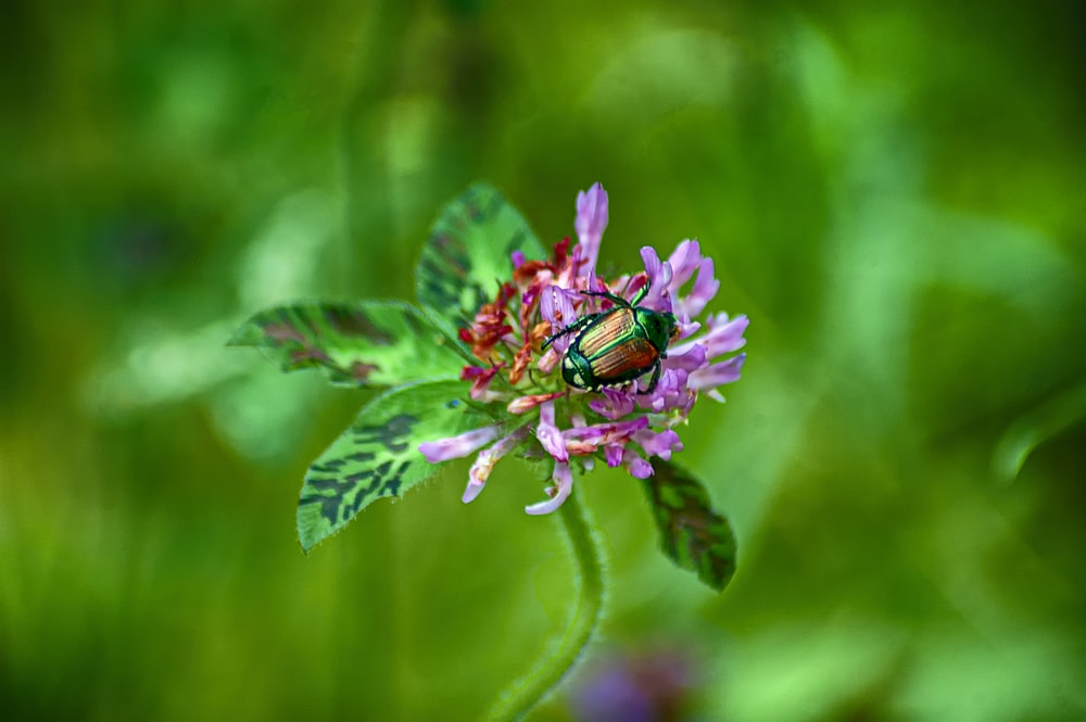 shallow focus photo of brown insect on purple flower