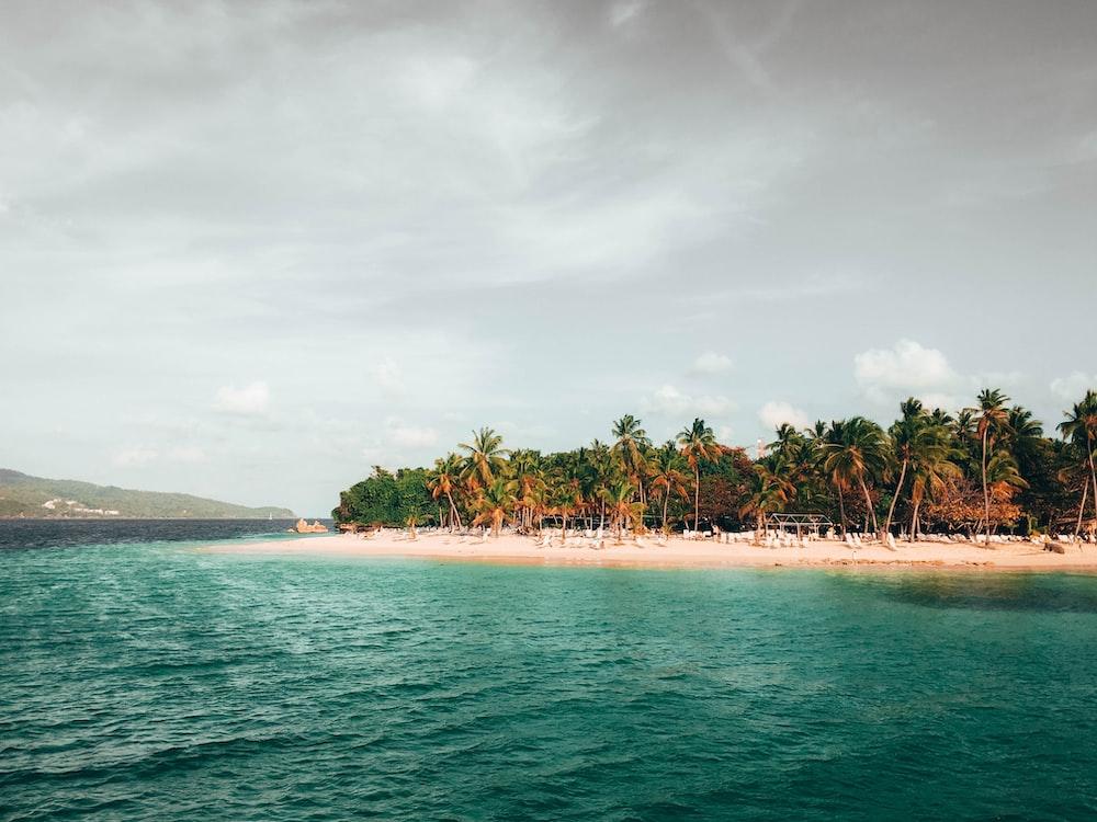coconut trees near ocean