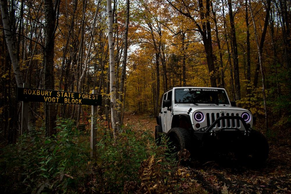 gray Jeep Wrangler SUV near tree