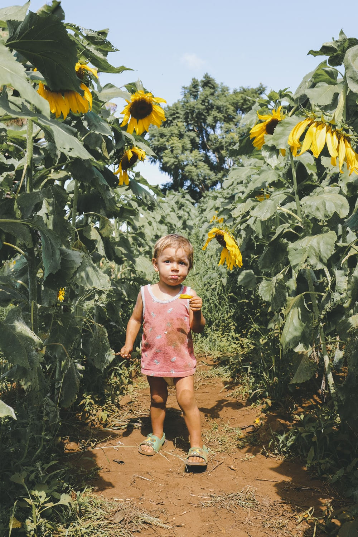 child standing on sungflower field