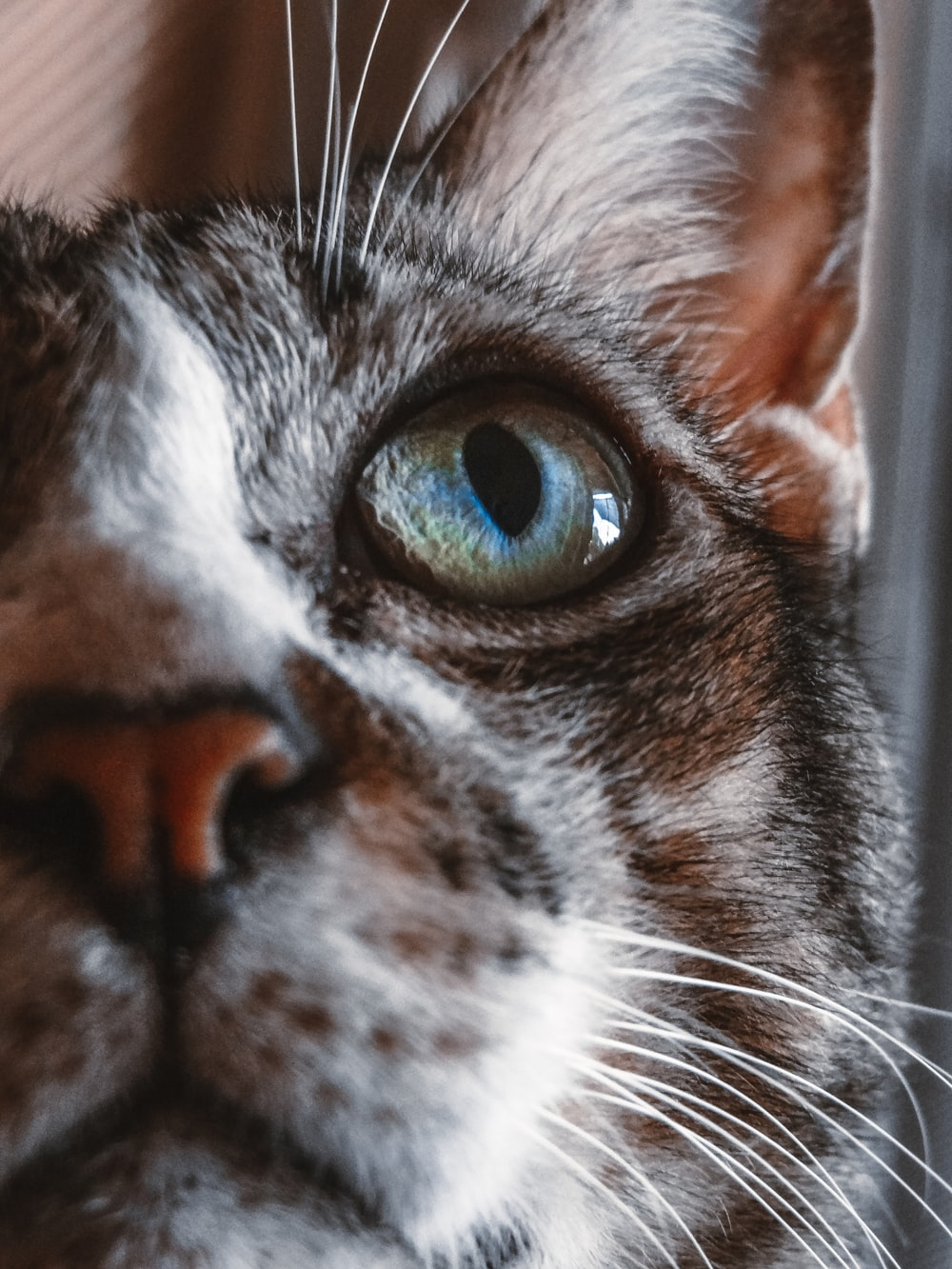 close-up photography of black and white tabby cat