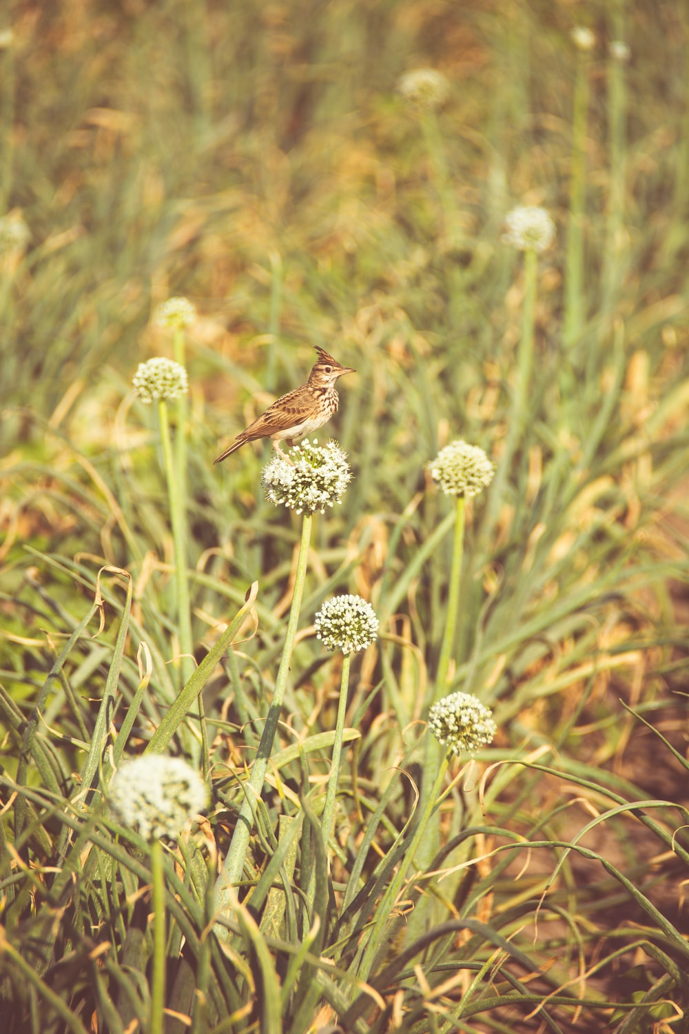 brown small-beaked bird on green flower