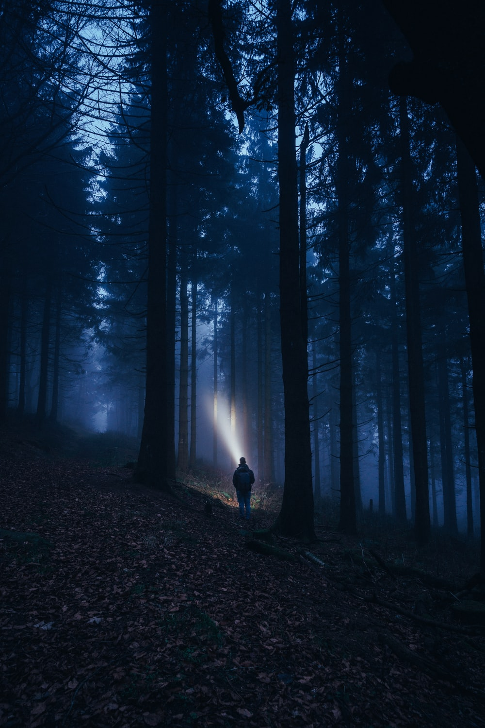 person with flashlight in the woods at night
