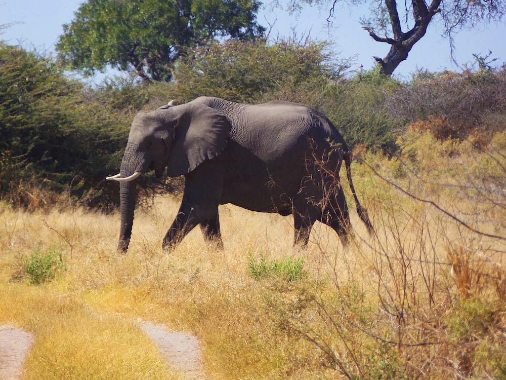 black elephant near tree