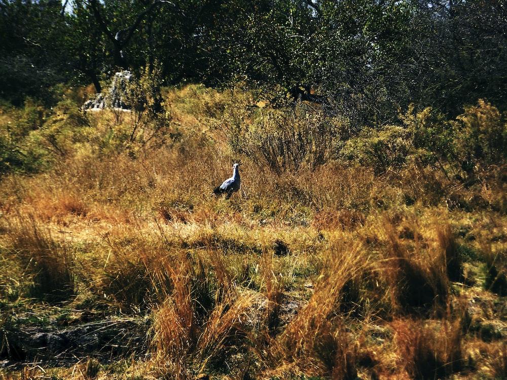 bird on the grass field