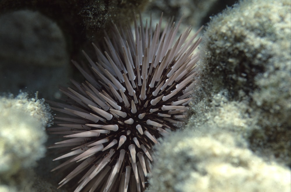 closeup photo of sea urchin