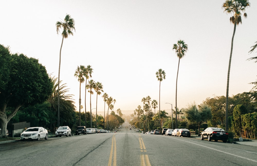 road between palm trees