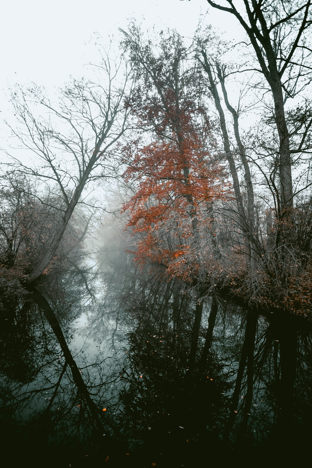 reflection of trees on body of water