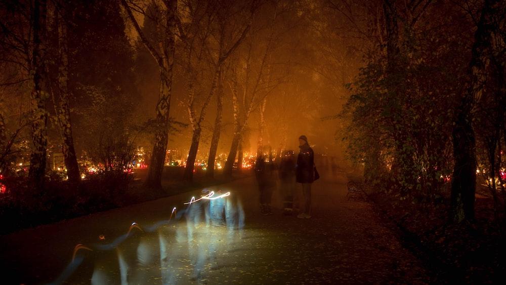 burning trees during nighttime