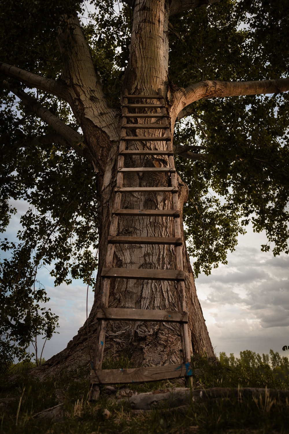 brown wooden ladder on brown trees