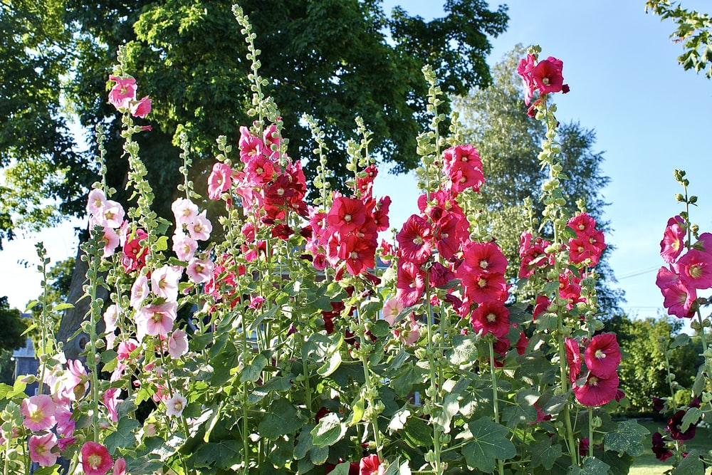 pink and red flowers during daytime