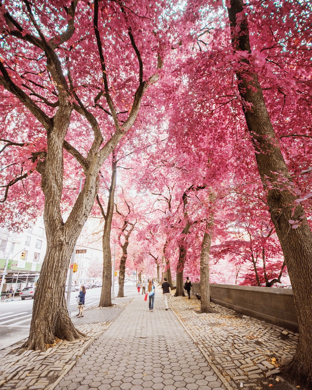 Pink Trees Pictures Download Free Images On Unsplash