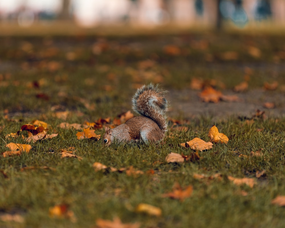 selective focus photo of brown and white squirrel on grass