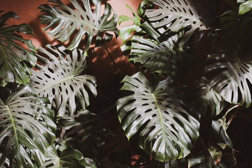 green bush plant