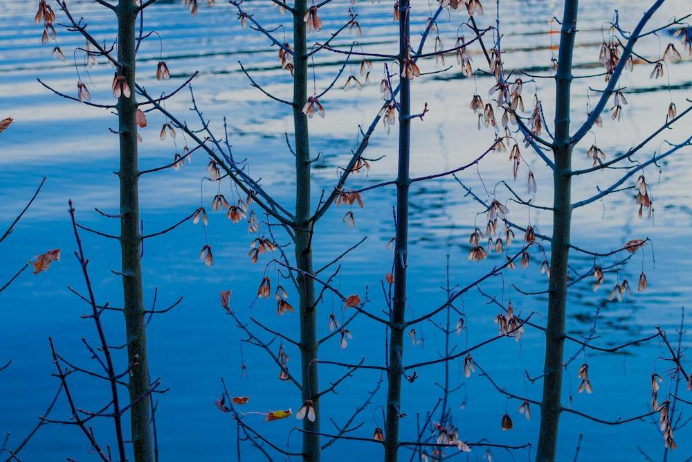 bare tree near calm body of water
