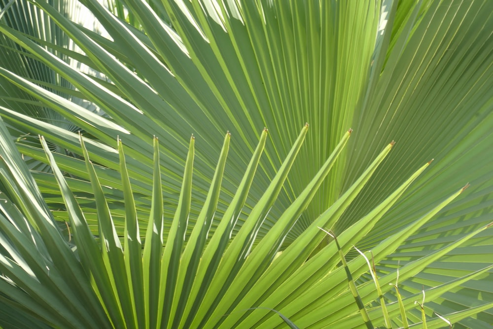 green palm plants during daytime