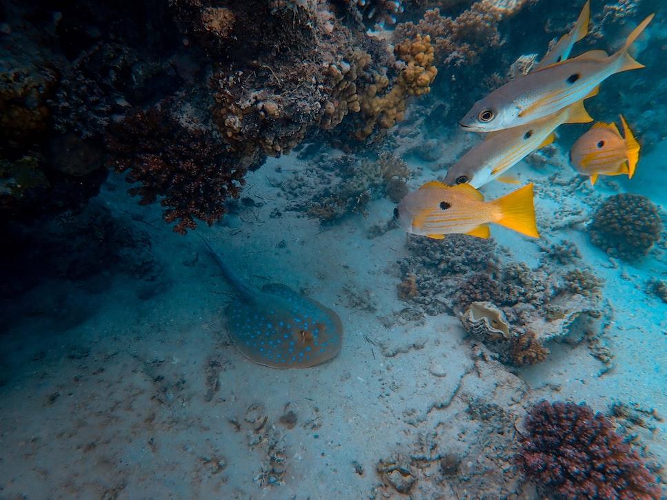 Cala Brandinchi, een van de mooiste plekken om te snorkelen in Sardinië