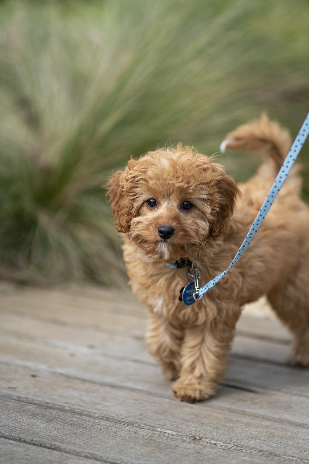 short-coated brown dog near grass