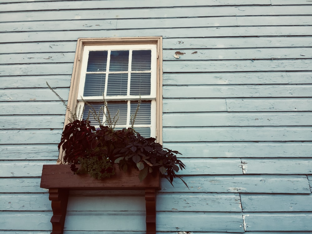 green plant in front of closed window