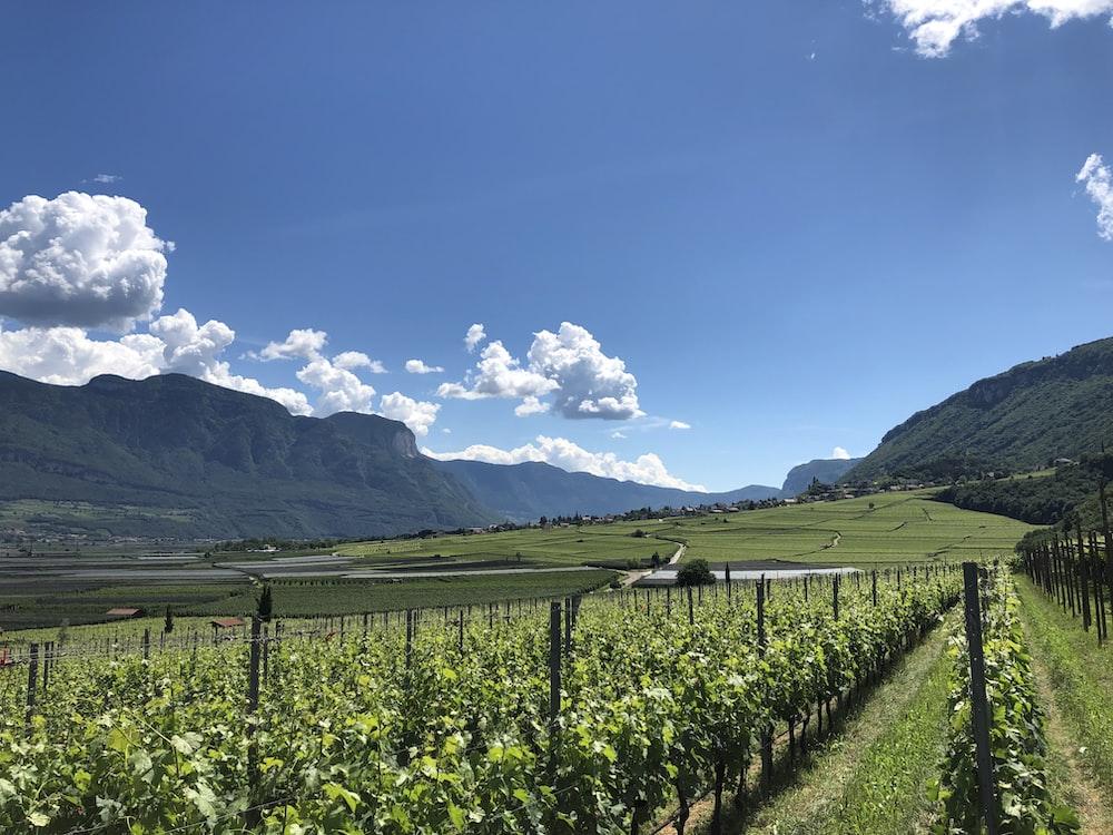 landscape photo of crop field
