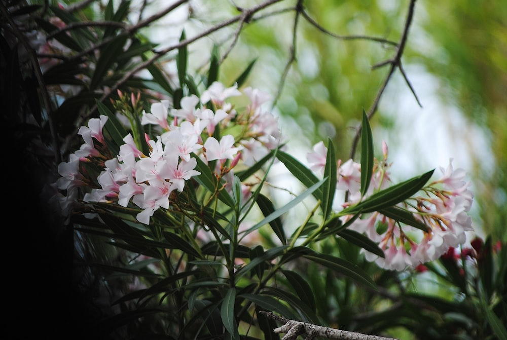 pink petaled flowers blooming at daytime