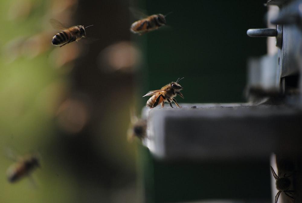honeybee on white platform in bokeh photography