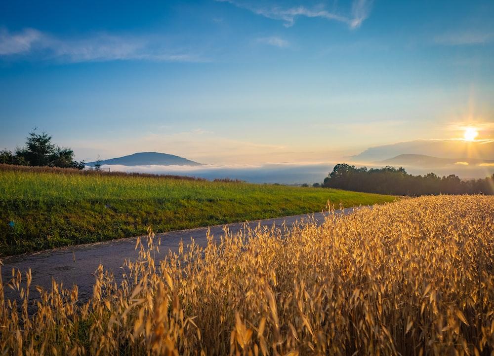farmland during golden hour