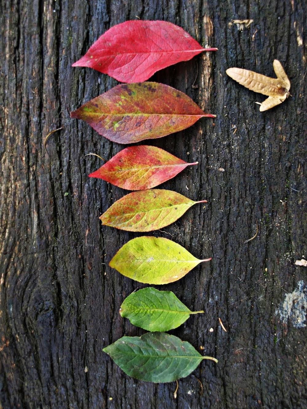 leaves on black surface