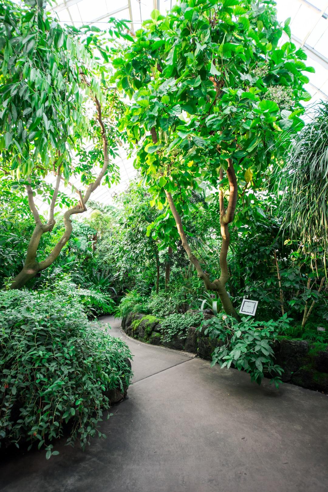 Through the jungle.