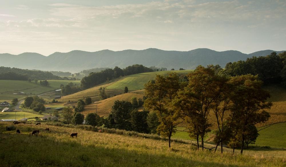 green grass mountain slope