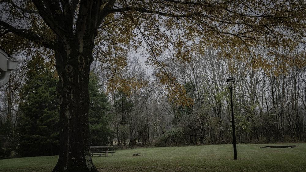 lamppost near tree during daytime