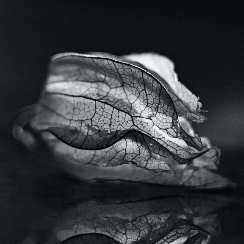 grayscale photo of leaf