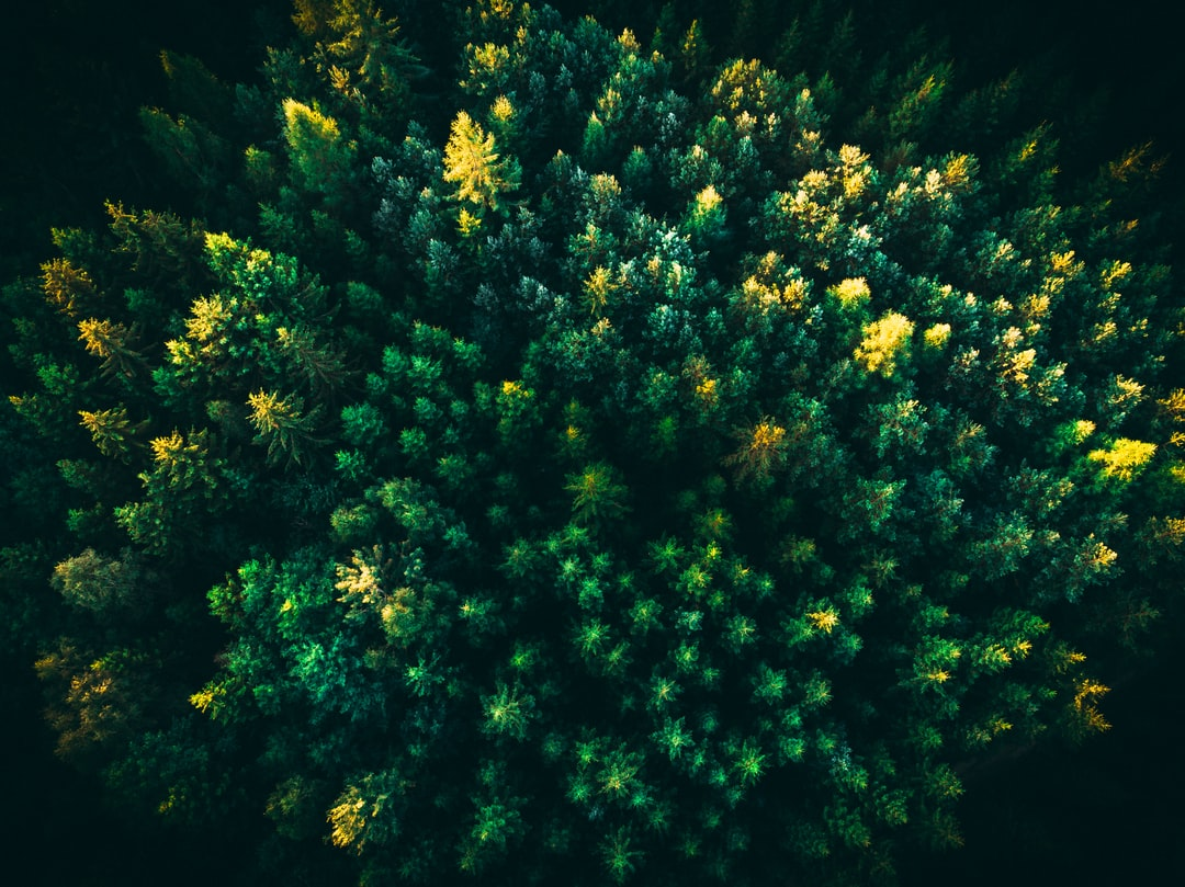 Drone picture of a forest in Lithuania