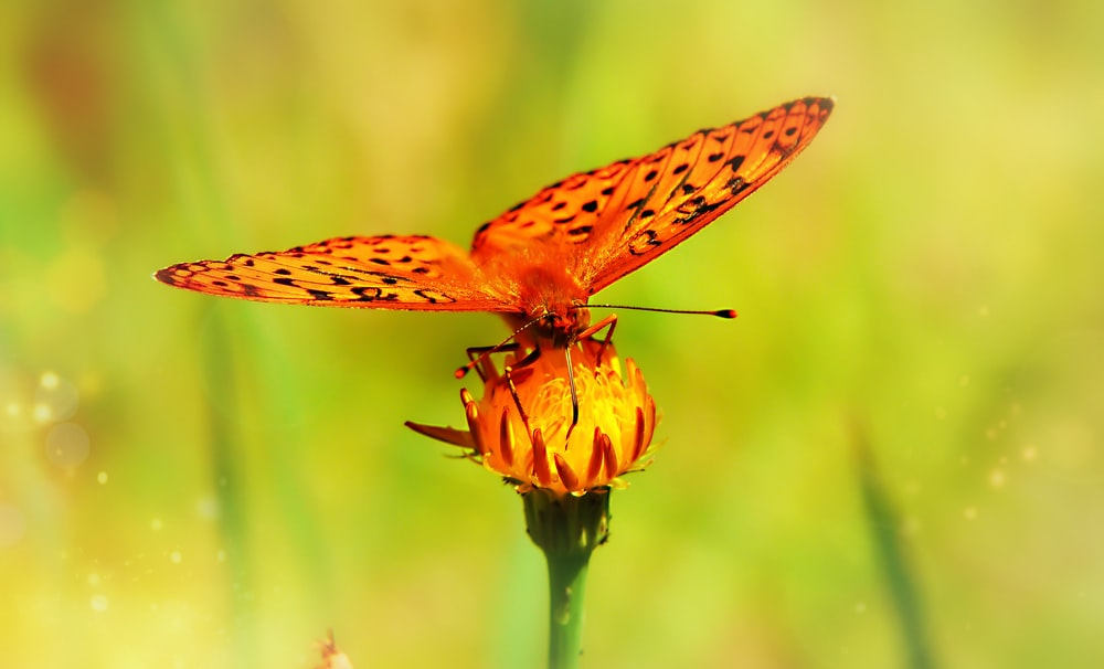 selective focus photo of butterfly perch on yellow flower