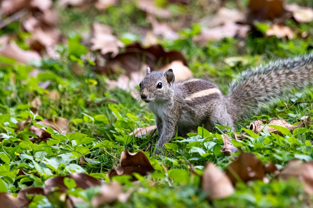 selective focus photo of brown squirrel